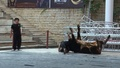 動画:人と雄牛がぶつかり合う、中国のカンフー闘牛
