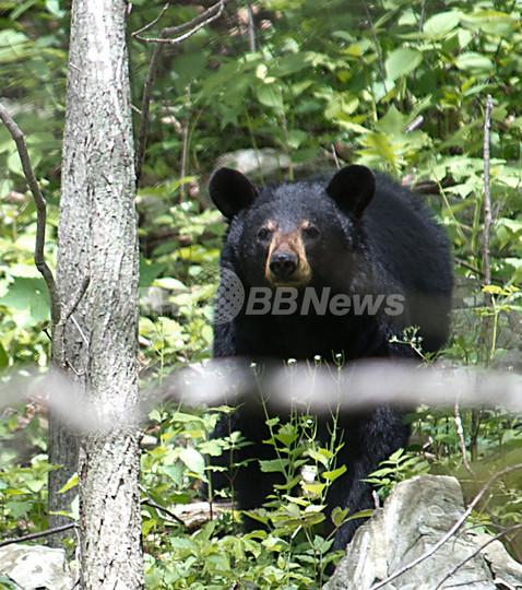 カナダで観光客がクマに襲われる