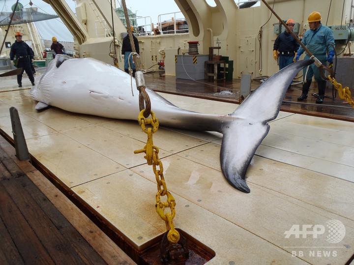 日本政府、IWC脱退を表明 商業捕鯨再開へ