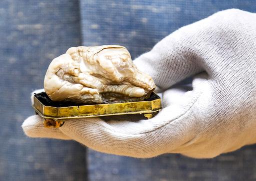 世界最大の淡水真珠「眠れる獅子」、日本人が4100万円で落札