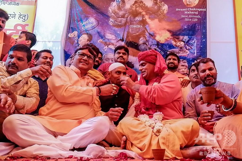 新型ウイルスの特効薬は牛の尿? ヒンズー教団体が「飲尿パーティー」開催 インド