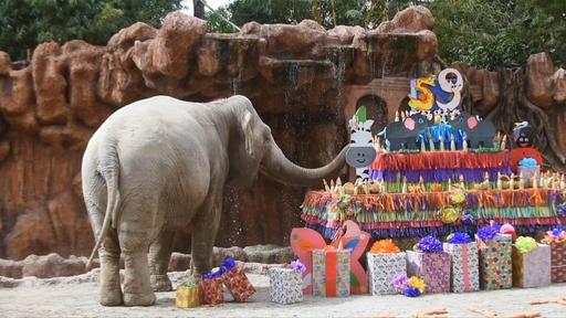 動画:59歳の誕生日おめでとう! ゾウにケーキのプレゼント グアテマラ