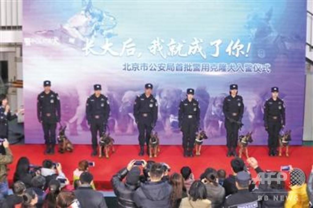 クローン犬6頭が北京公安局に入隊、正式に首都警察のメンバーに