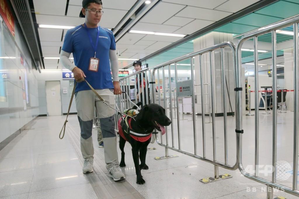 盲導犬が西安の地下鉄で特訓中 10月には視覚障害者の「相棒」に