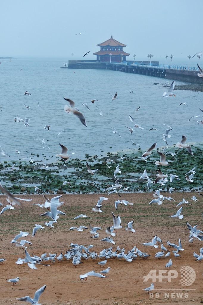 閉鎖された観光地、名物のカモメたちに心配り 中国・青島