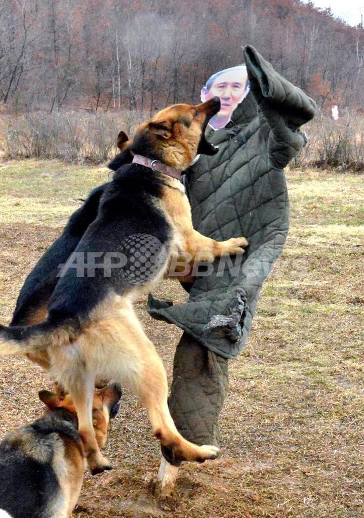 「韓国国防相」を襲う北朝鮮の軍用犬、写真公開