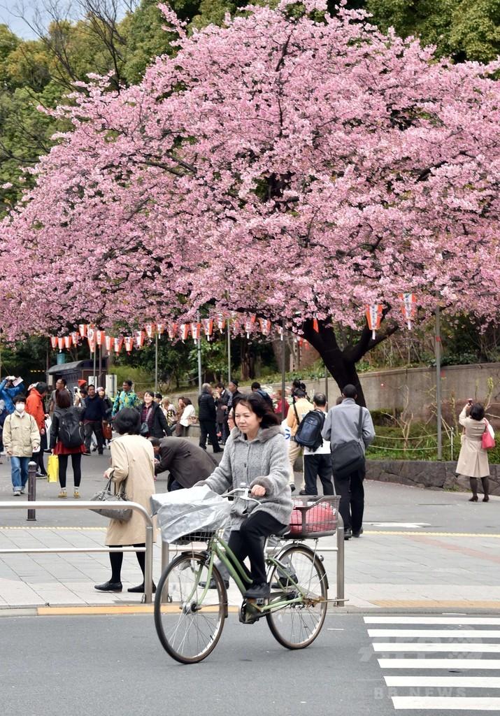 桜の起源に「韓国は無関係」、中国が日韓の論争に参戦