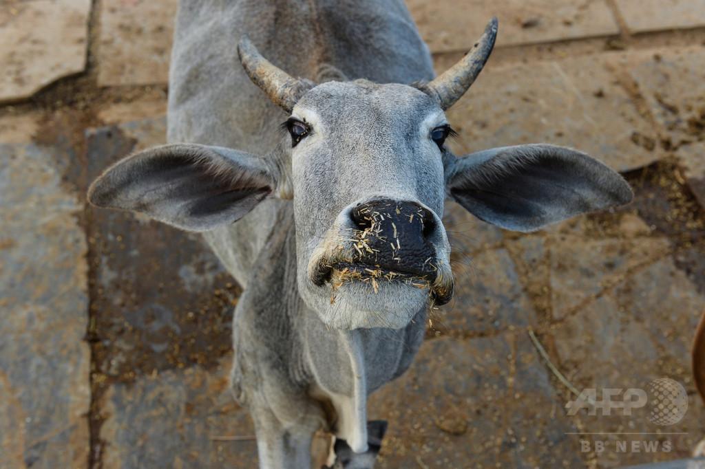 「牛」は自主規制音で消せ、インド映画検閲に監督反発