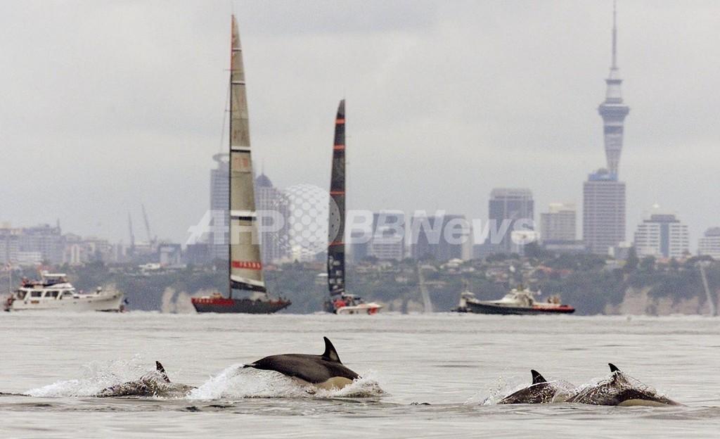 「もっと遊んで!」、イルカが帰してくれず女性救出