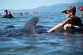 打ち上げられたクジラ、サメに追われた? 「人間の鎖」で守る NZ