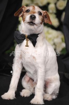 <第84回アカデミー賞>名犬アギーの首輪は「ショパール」