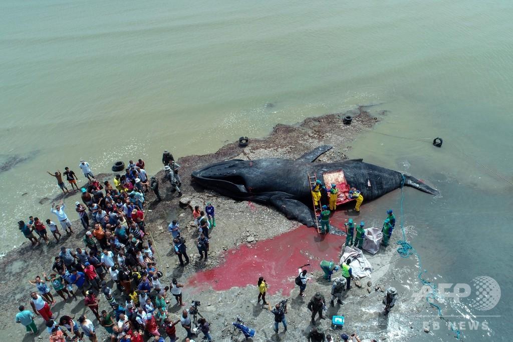 ザトウクジラが打ち上げられて死ぬ ブラジルの海岸で
