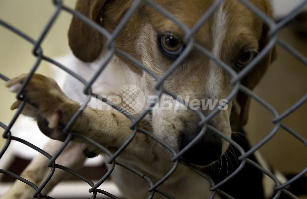 サブプライム問題の最大の被害者?米で遺棄ペット急増