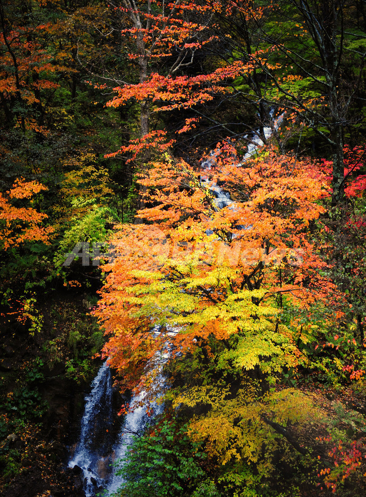 日本の美、上高地の紅葉 長野