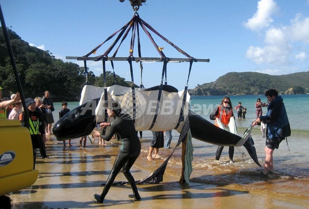 ニュージーランドの浜辺でクジラ80頭座礁、荒天で救出進まず