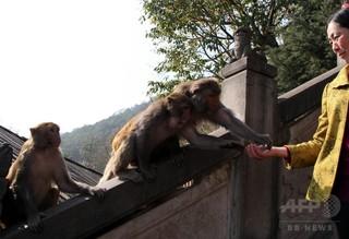 猿にかみ殺された?ウェイボーでうわさ広がる