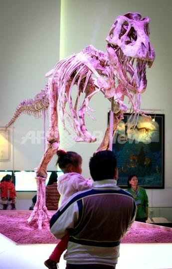 密輸された恐竜の化石、返還先のモンゴルで公開