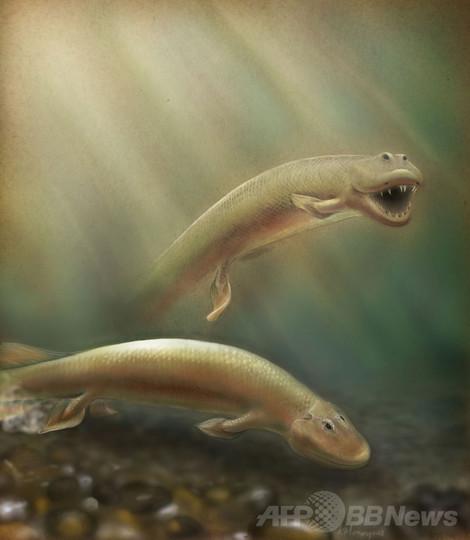 ひれから足へ、3億7500万年前の化石に進化の節目 米研究