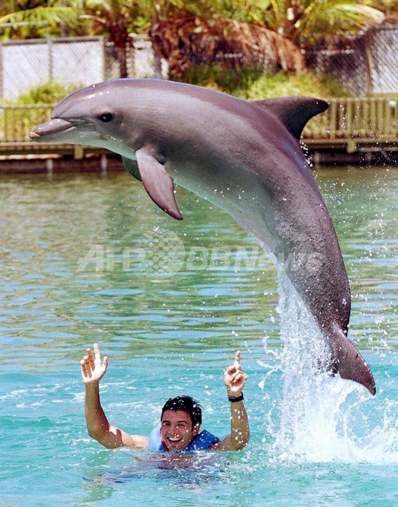 座礁したクジラをイルカが救う、ニュージーランド