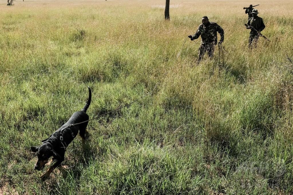 密猟者を追い詰めるマラ・トライアングルの追跡犬部隊、ケニア