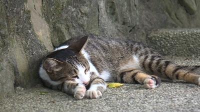 動画:台湾の猫村「ホウトン」 至る所に猫、猫、猫