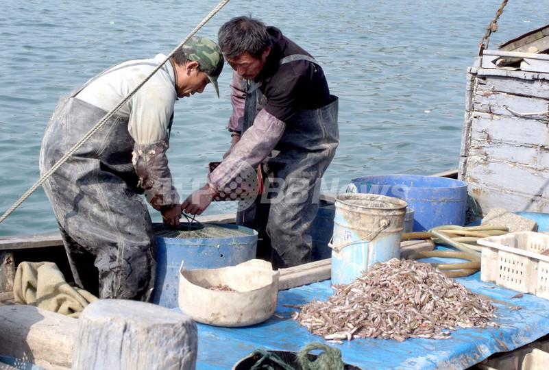 漁業資源の激減、アジアで政治問題化するきざし 専門家