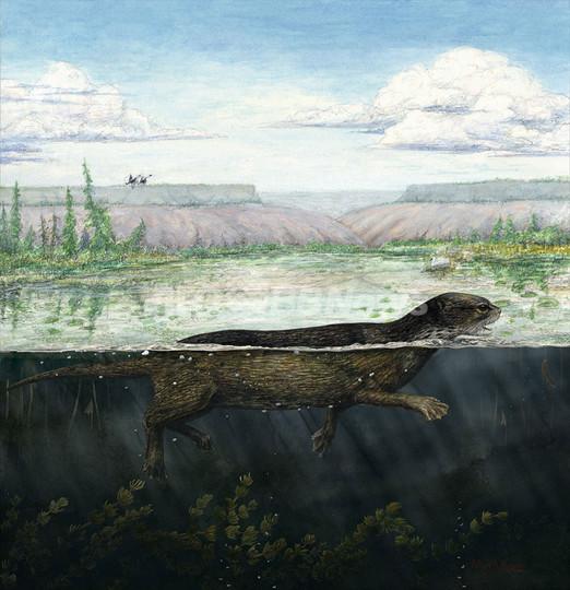 アザラシの祖先の化石か、陸から海への進化を裏づけ カナダ
