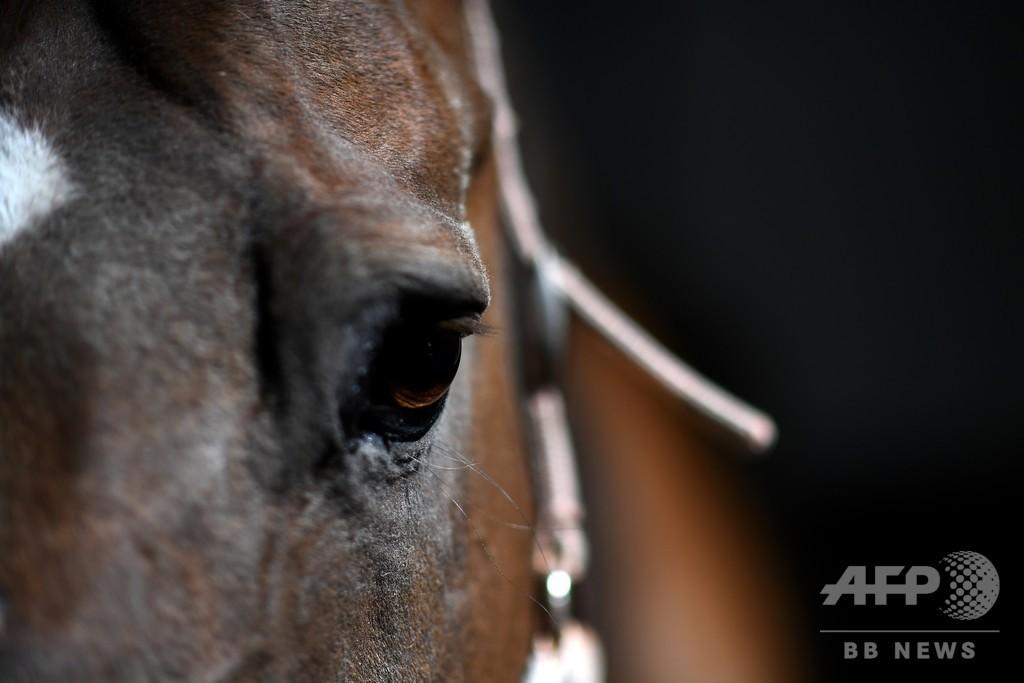 馬を生きたまま切断、体の一部が消える… 仏で謎の事件相次ぐ