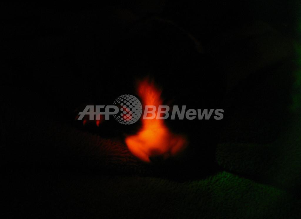 暗闇で赤く光るクローン犬、ソウル大チームが作製