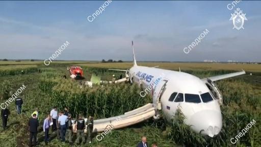 動画:ロシア機がトウモロコシ畑に緊急着陸、カモメの群れと衝突 現場の映像