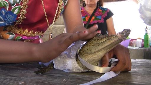 動画:「花嫁はワニ」!? 雨の恵みと豊穣願う伝統行事 メキシコ