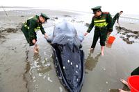 三たび「迷子」の子どものザトウクジラ、救助のかいなく死亡 中国・江蘇省