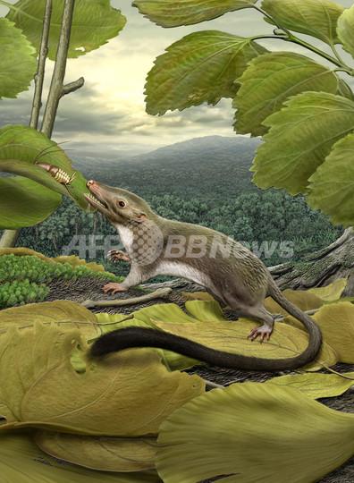 ヒトの祖先は虫を食べる小型4足歩行動物?サイエンス誌