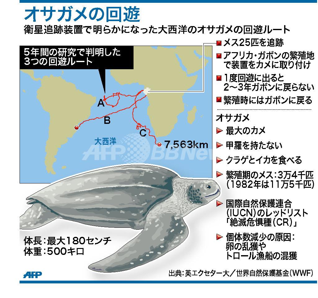オサガメの大西洋回遊ルート、衛星使った研究で明らかに