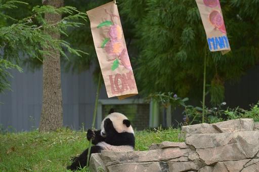 記念行事も中国式、米首都のパンダが1歳に