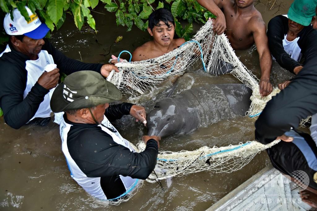 アマゾンカワイルカの水銀汚染、憂慮すべきレベルに