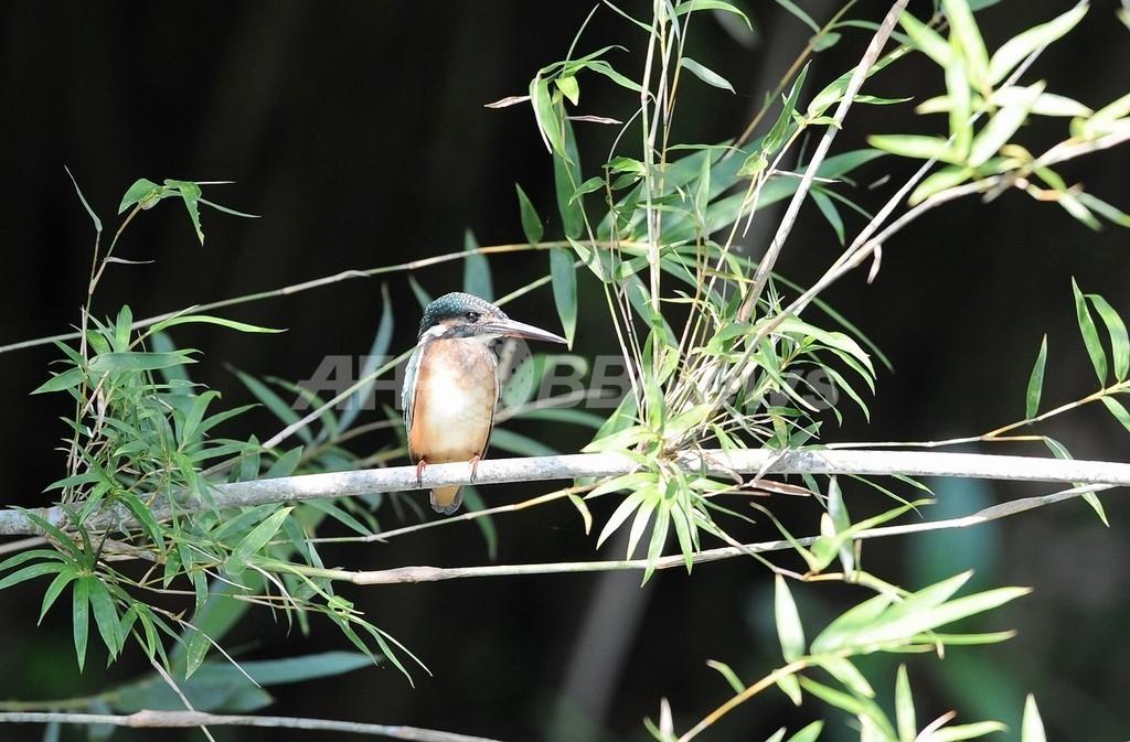 気候変動には「竹」が有効、これだけある利点 COP16
