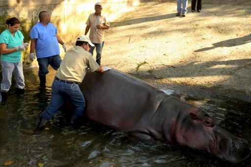 動物園のカバ、死因は劣悪な飼育方法か エルサルバドル
