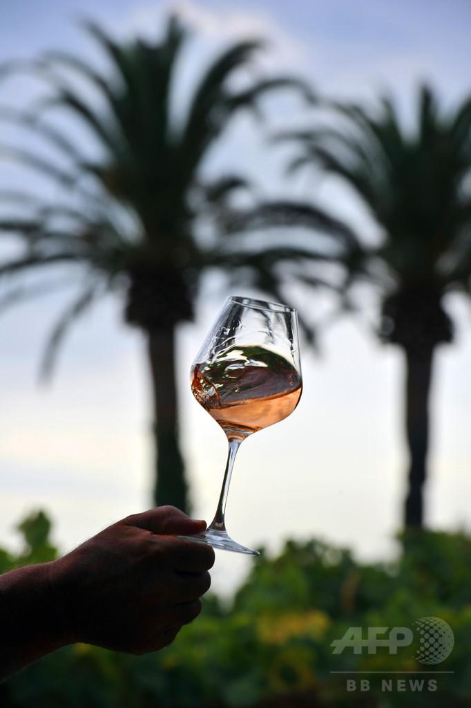 ワインの芳香、大半は酵母に由来 研究