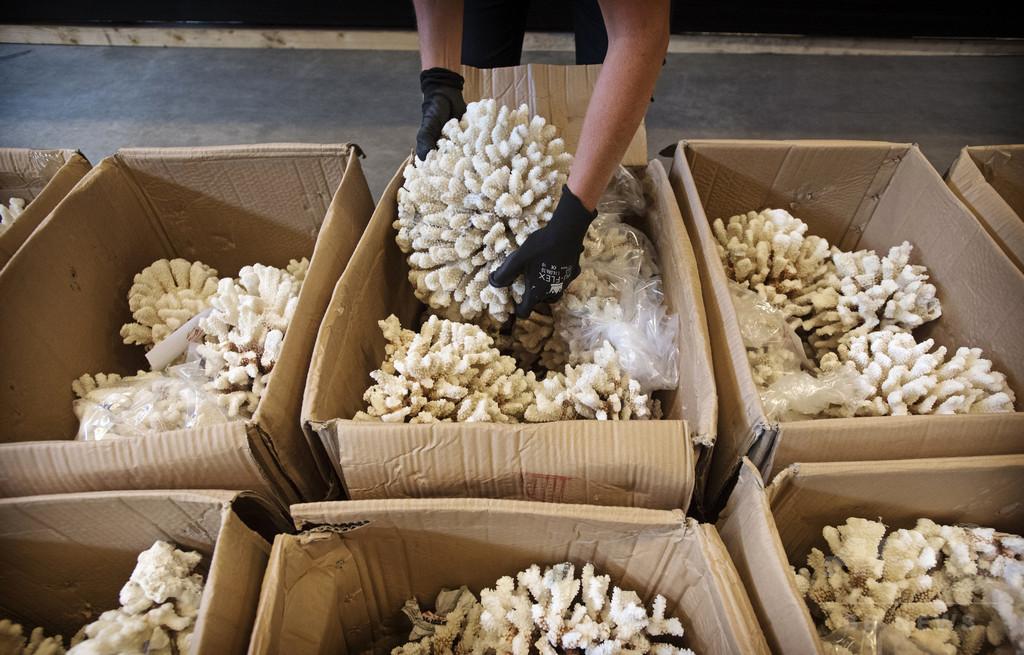 サンゴ2トンや動物の骨などの密輸品を押収 オランダ
