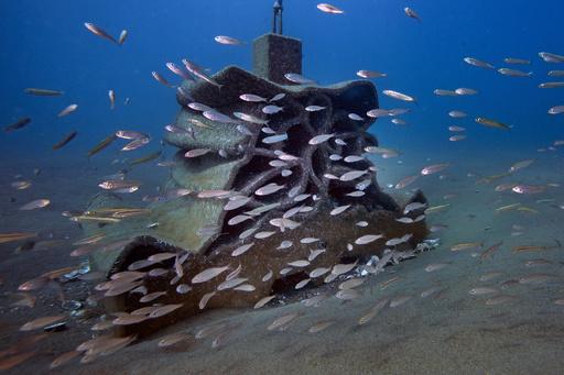 3Dプリンターで作製の人工魚礁、生物多様性の回復に一役 仏