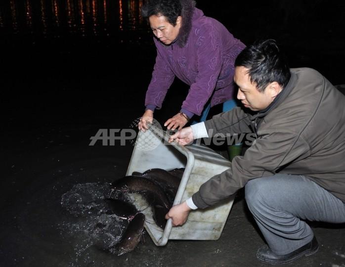 「放生」で毎年大量の鳥や魚が犠牲に、政府が禁止を検討 台湾