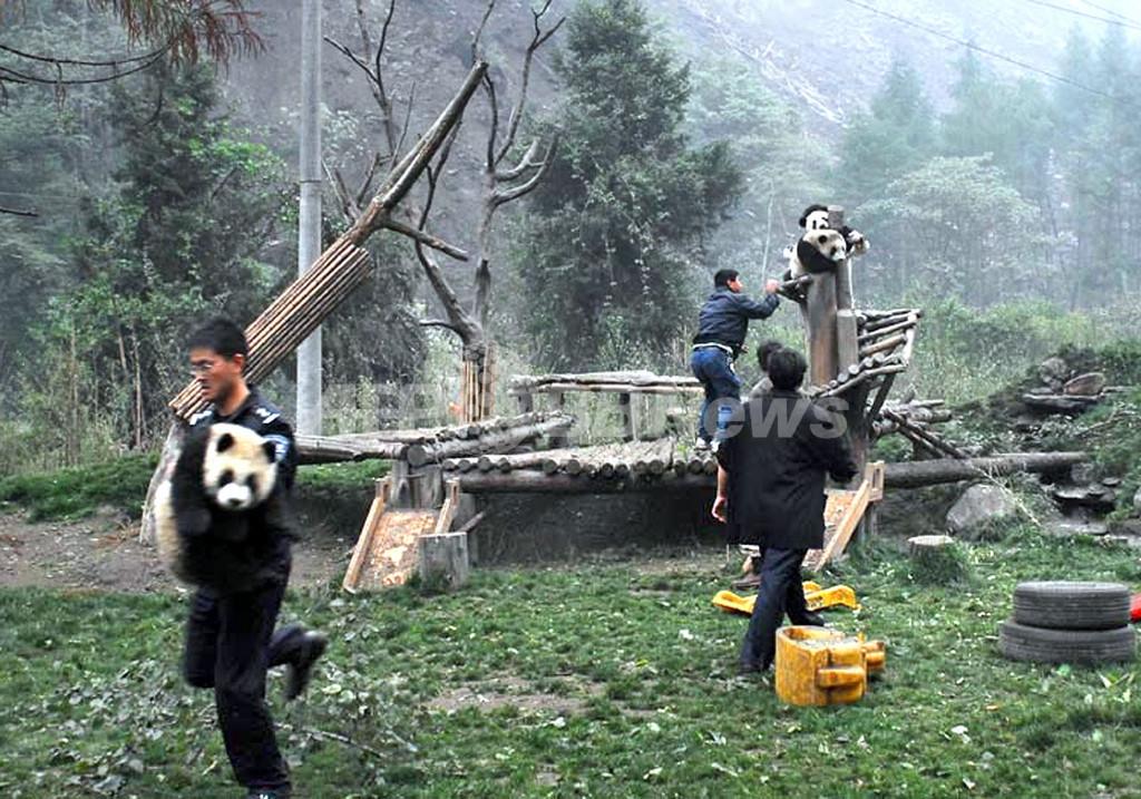 四川大地震、パンダを守るために奔走する職員たち