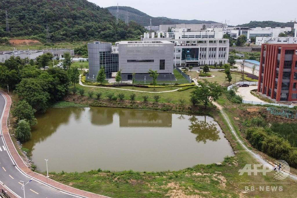 武漢研究所が保管のコウモリ由来コロナウイルス株、「新型とは別」と同所長