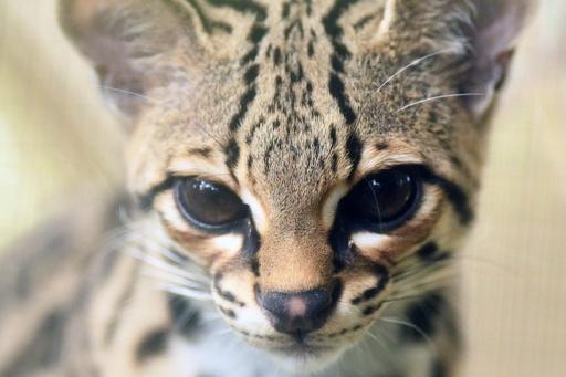 違法取引された絶滅の危機にある種を保護、エルサルバドル