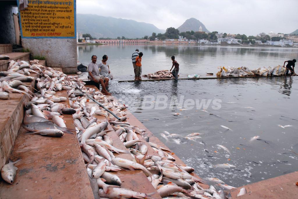 ヒンズー教の祭りが原因?湖に大量の死んだ魚