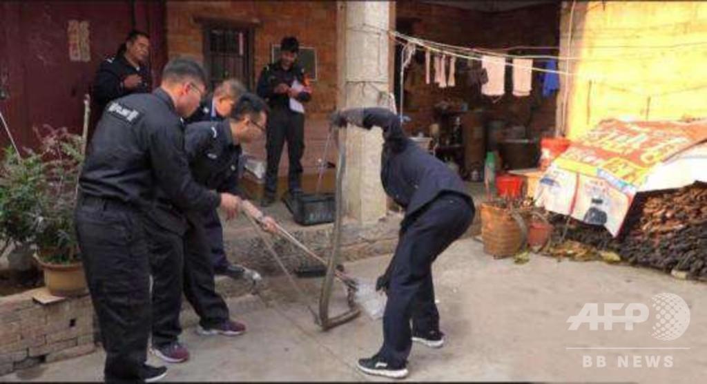 雲南の民家でキングコブラ捕物騒ぎ 体長2.5メートル