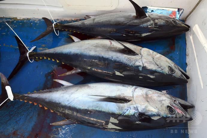 公海での漁業は「巨額助成金」頼み、日本など5か国が市場を寡占