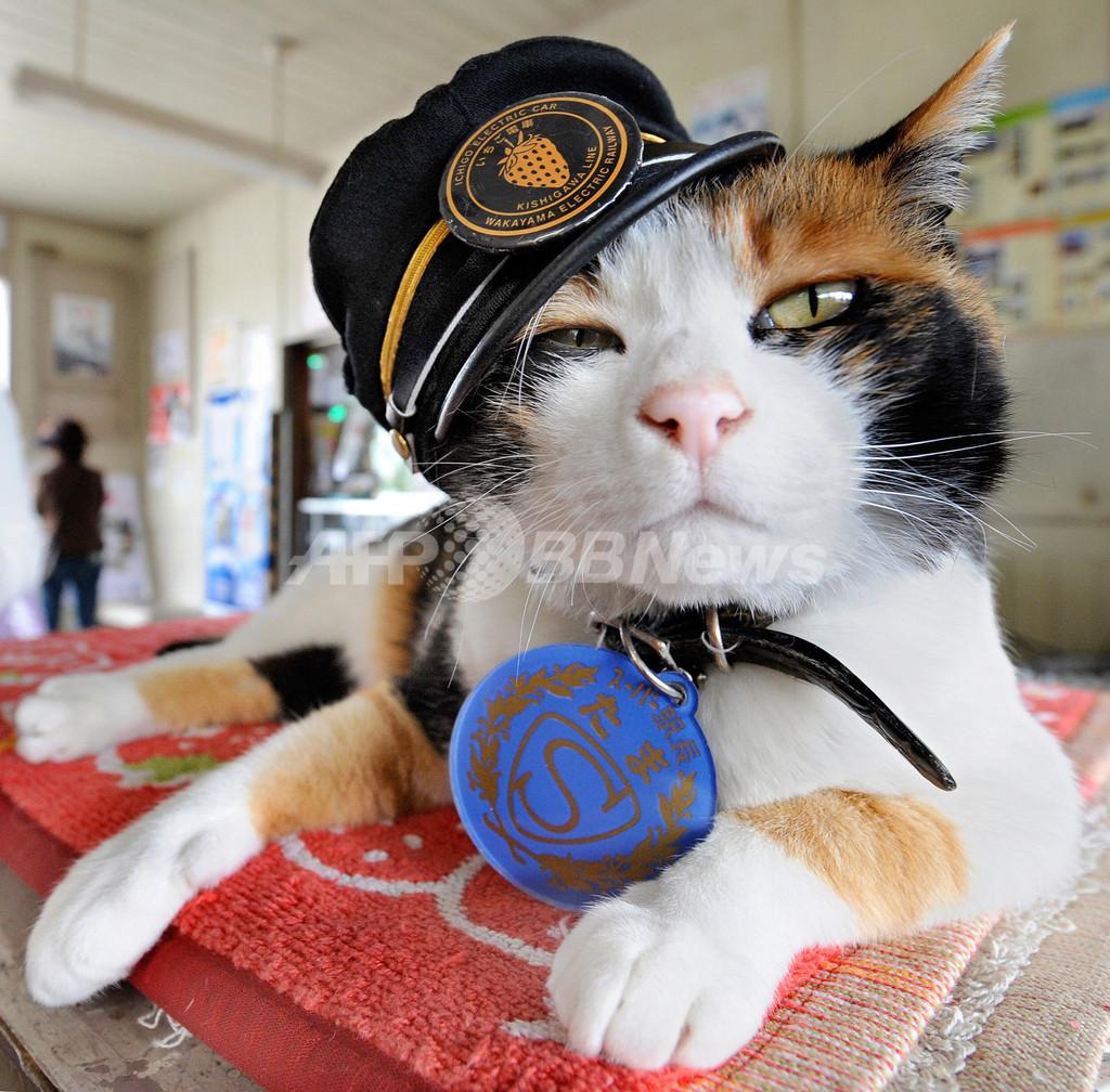 和歌山のネコ駅長「たま」、経済効果は11億円