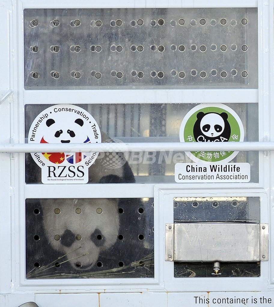 17年ぶりのパンダ2頭、バグパイプで歓迎 英国